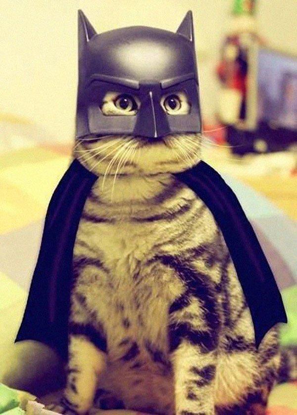 disfraces-halloween-mascotas17