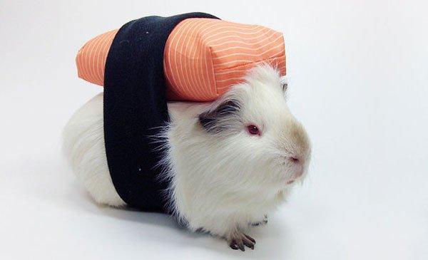 disfraces-halloween-mascotas18