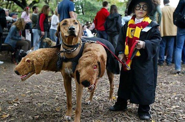disfraces-halloween-mascotas20