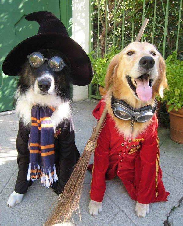 disfraces-halloween-mascotas23