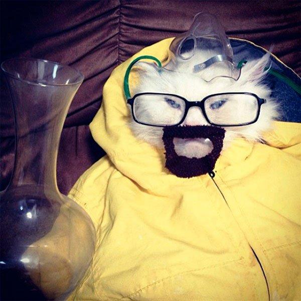disfraces-halloween-mascotas24