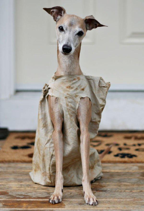 disfraces-halloween-mascotas25
