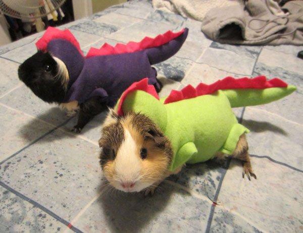 disfraces-halloween-mascotas26