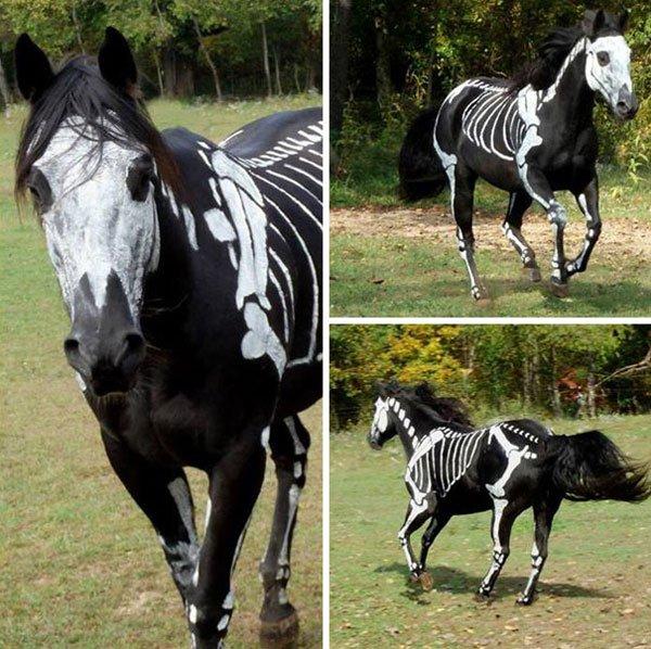 disfraces-halloween-mascotas3