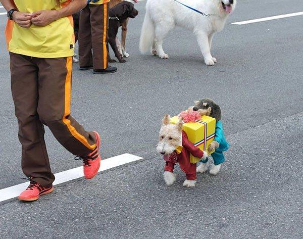 disfraces-halloween-mascotas5