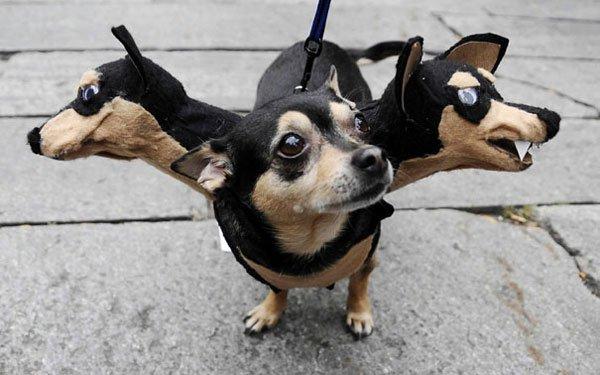 disfraces-halloween-mascotas6