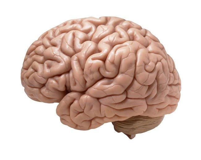 efectos-cerebro5