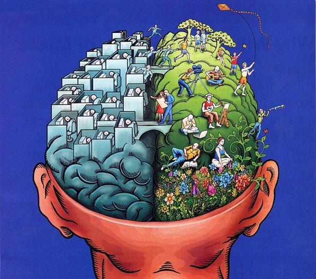 efectos-cerebro8