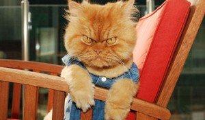 gato garfi