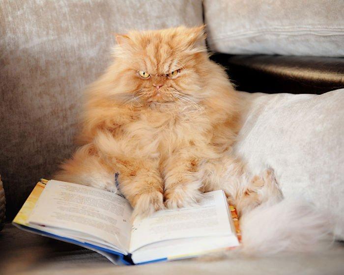 garfi-gato-enfadado18