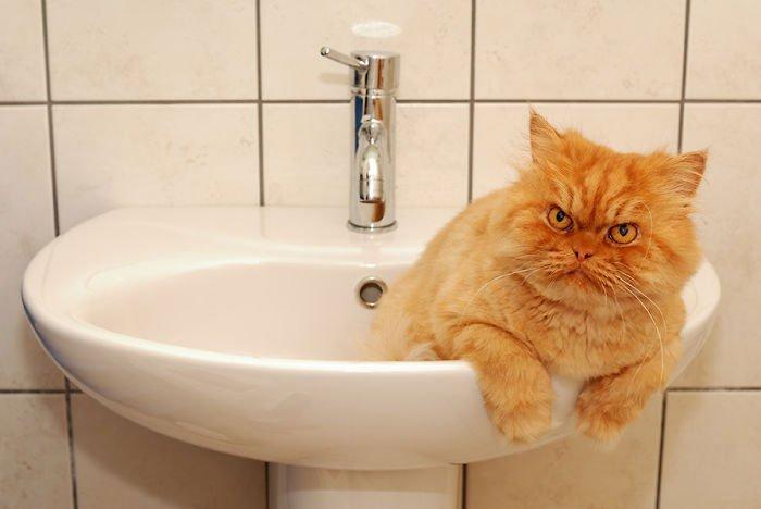 garfi-gato-enfadado3
