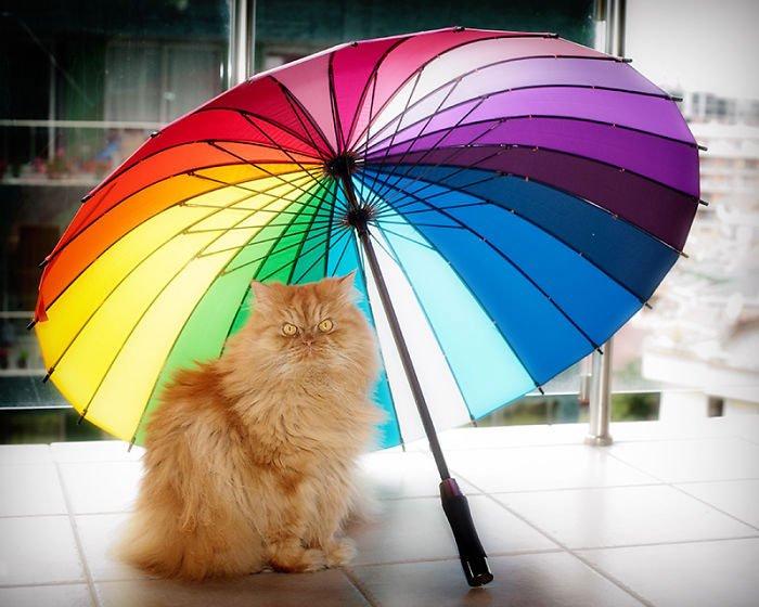 garfi-gato-enfadado6