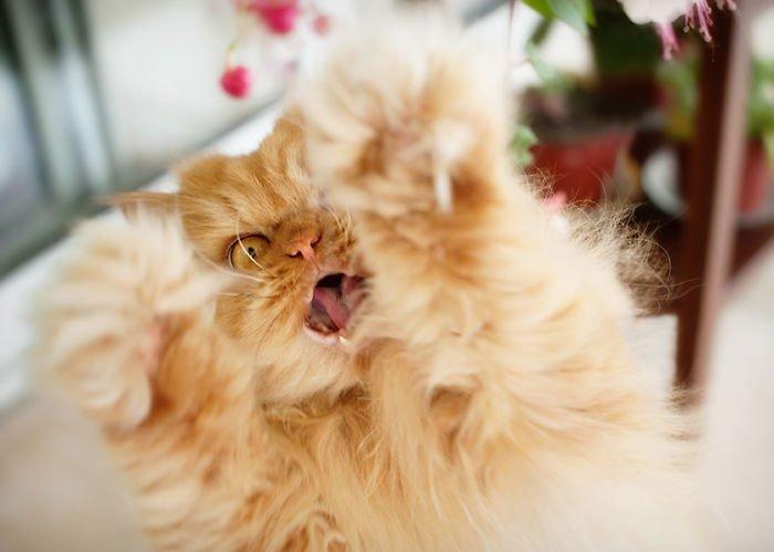 garfi-gato-enfadado8