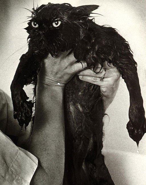 gato-mojado15