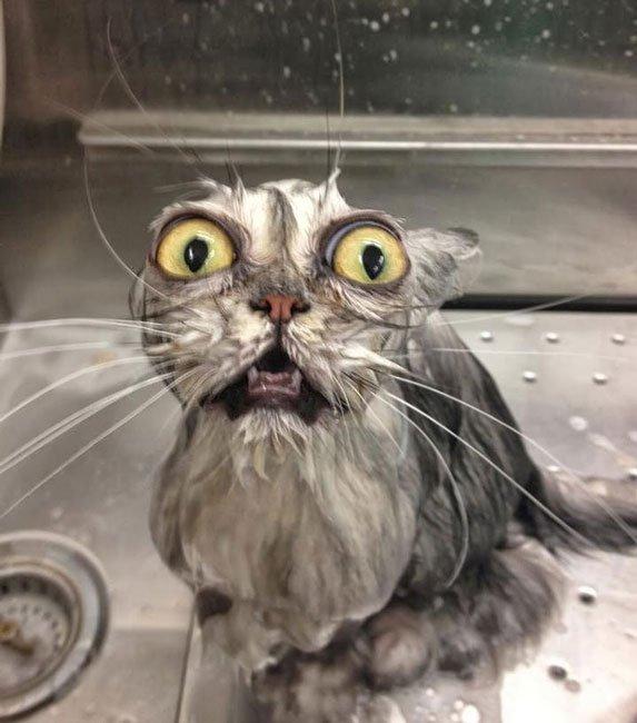 gato-mojado18