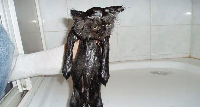 gato-mojado21