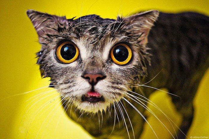 gato-mojado9