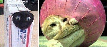 20 Gatos cuya curiosidad les ha traído problemas