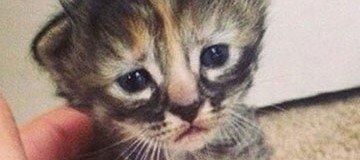 El gato más triste que has visto en toda tu vida. Pero es una ternura.