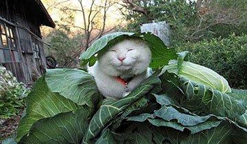 Todo el mundo habla de este gato, cuando veas estas imágenes entenderás el porque