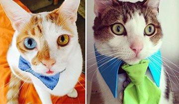 Gatos con corbata