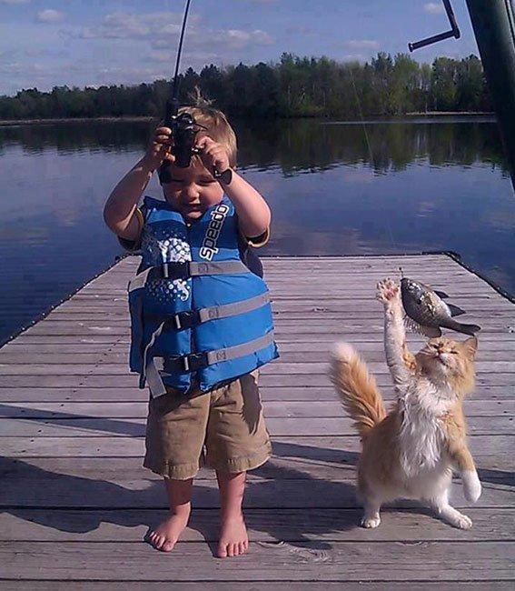 gatos-ladrones10