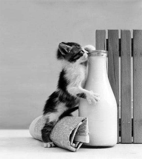 gatos-ladrones11