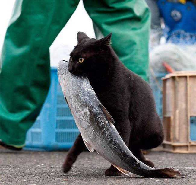 gatos-ladrones14