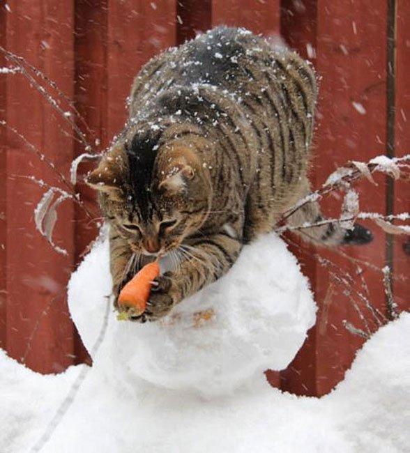 gatos-ladrones15