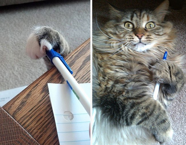 gatos-ladrones3