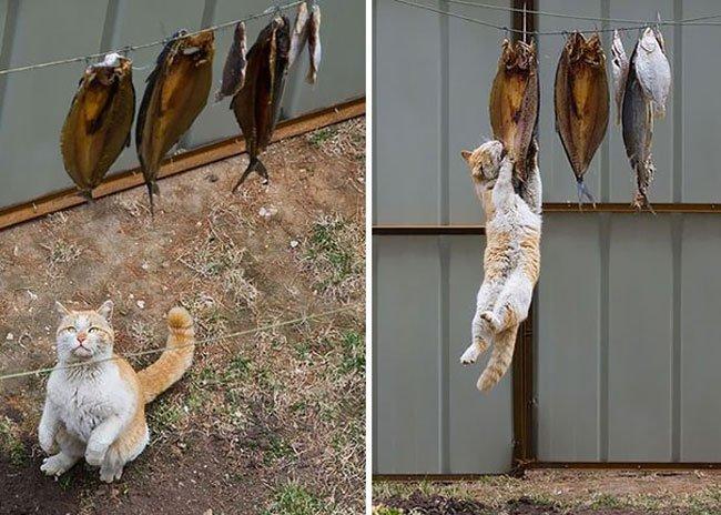 gatos-ladrones4
