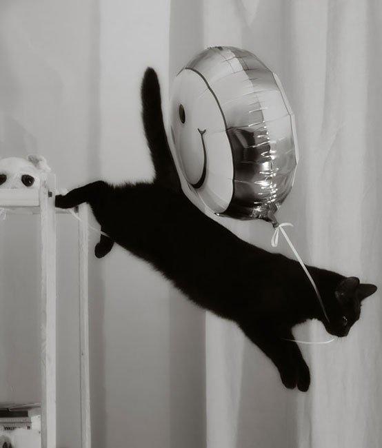 gatos-ladrones6