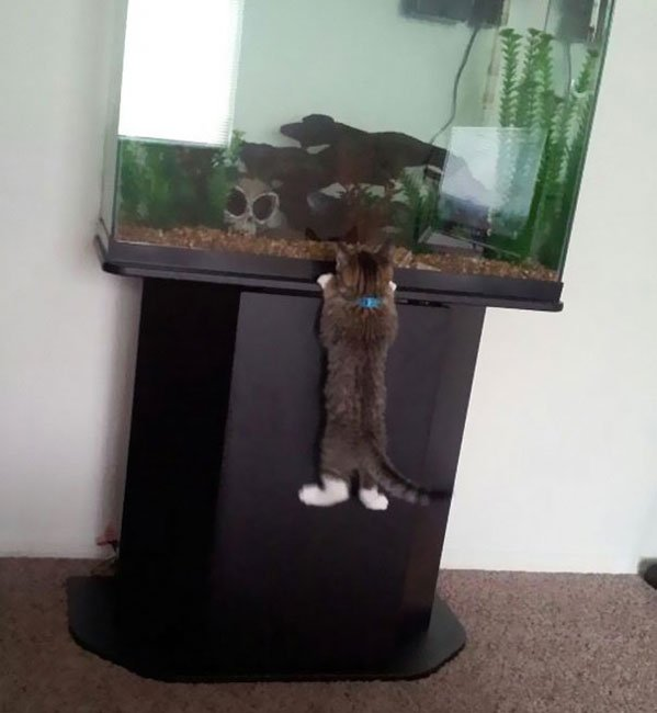 gatos-ladrones9