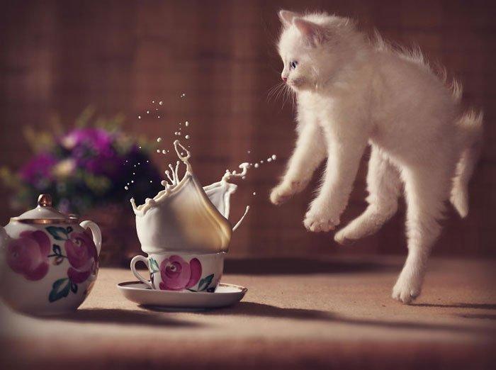 gatos-ninja-saltando1