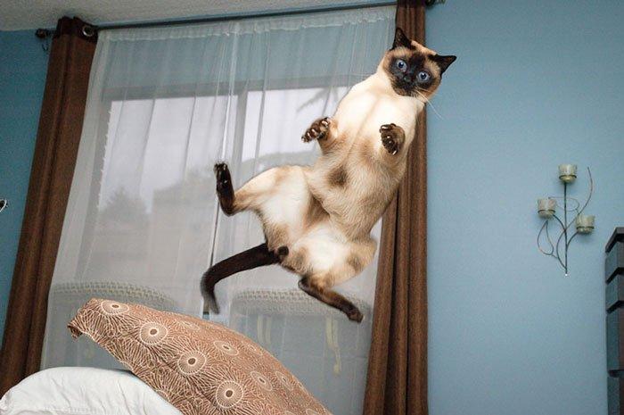 gatos-ninja-saltando10