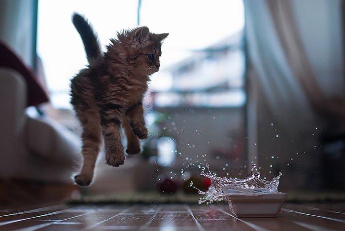 gatos-ninja-saltando11