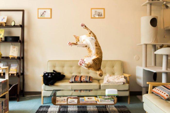 gatos-ninja-saltando12