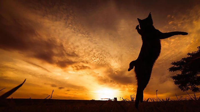 gatos-ninja-saltando13