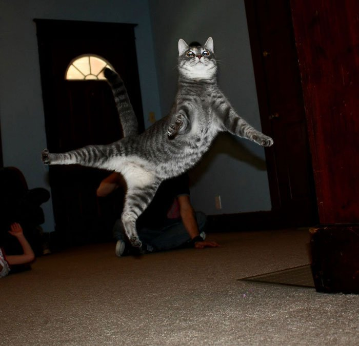 gatos-ninja-saltando14