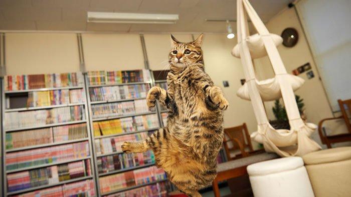 gatos-ninja-saltando15