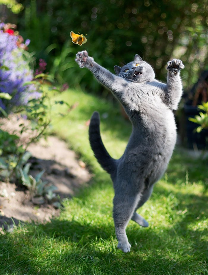 gatos-ninja-saltando2