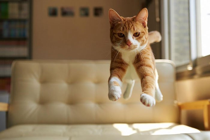 gatos-ninja-saltando3