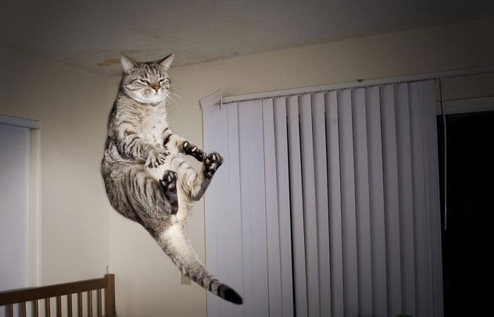 gatos-ninja-saltando4