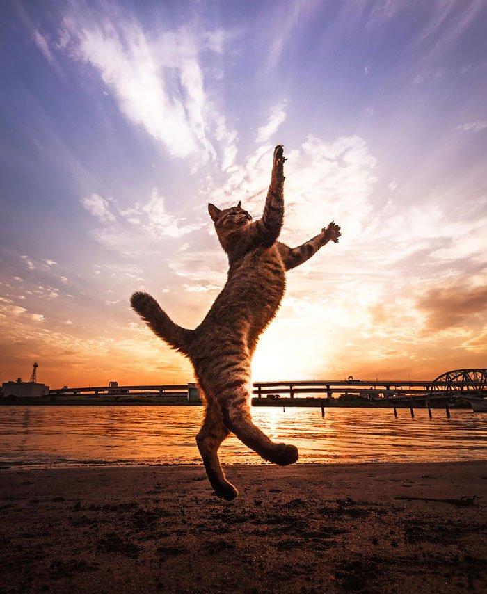 gatos-ninja-saltando5