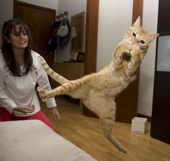gatos-ninja-saltando6
