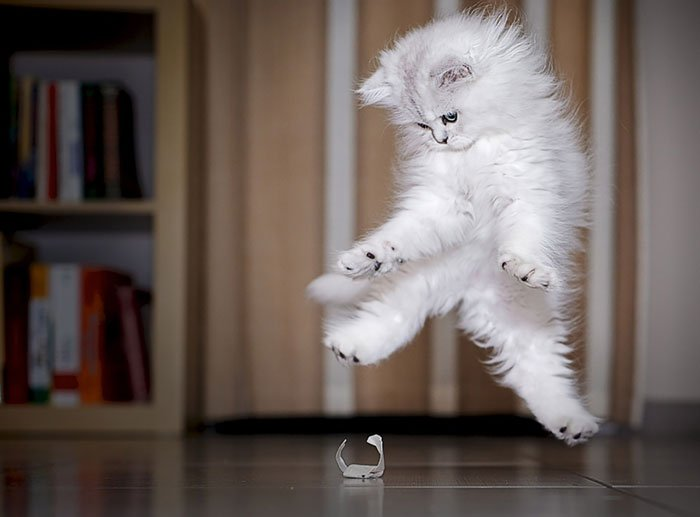 gatos-ninja-saltando7