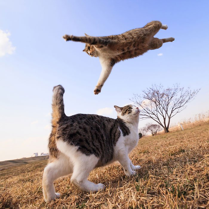 gatos-ninja-saltando8