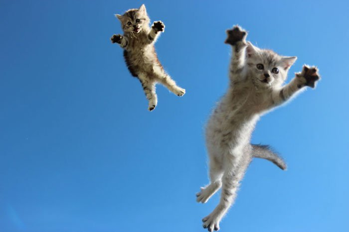 gatos-ninja-saltando9