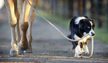 Si alguien te cuenta lo que hace este perro no le creerás. Así que tienes que verlo
