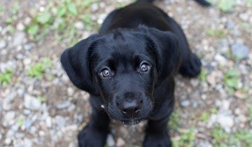 30 Cachorros que te derretirán el corazón con su mirada. Imposible resistirse